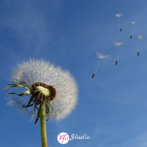 Take 10 - Dandelion Meditation
