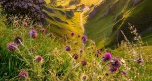 Mindful Moments Mountain Flowers